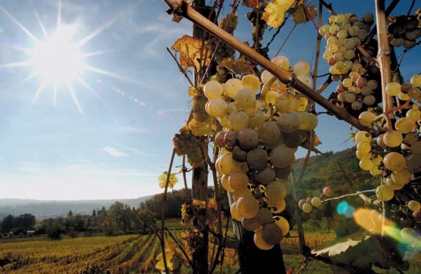 © Zvardon / Conseil Vins Alsace