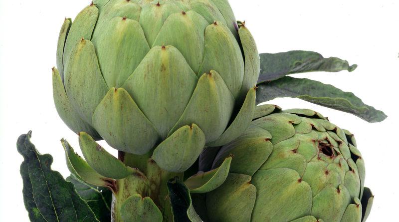 L'artichaut, un légume aux multiples facettes
